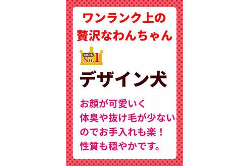 成約済の秋田県のミックス犬の8枚目