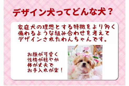 成約済の秋田県のミックス犬の7枚目