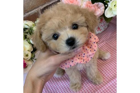 成約済の香川県のミックス犬の1枚目