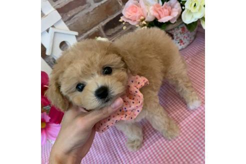 成約済の香川県のミックス犬の4枚目