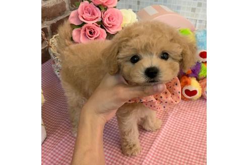成約済の香川県のミックス犬の2枚目