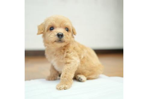 販売中の愛媛県のミックス犬の5枚目