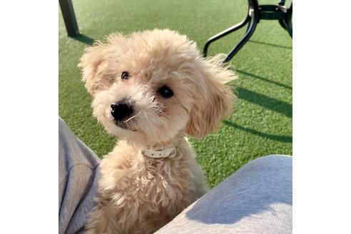 成約済の東京都のミックス犬の8枚目