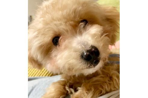 販売中の東京都のミックス犬の4枚目