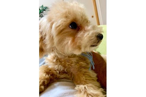 販売中の東京都のミックス犬の3枚目