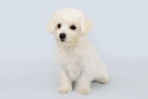 成約済の神奈川県のミックス犬の3枚目