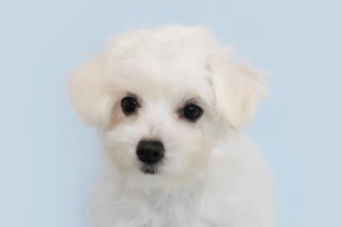 成約済の神奈川県のミックス犬の2枚目