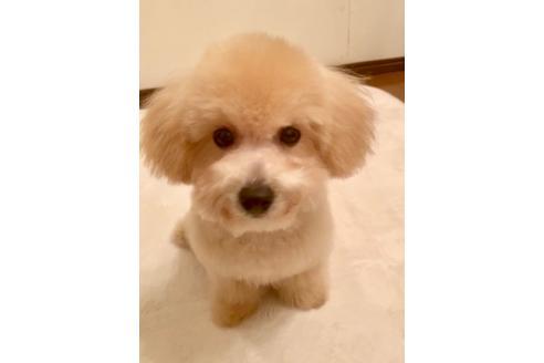 成約済の東京都のミックス犬の5枚目