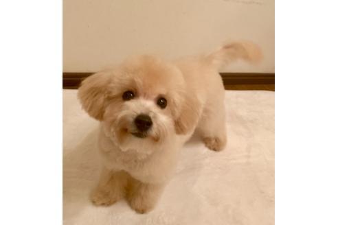 成約済の東京都のミックス犬の4枚目