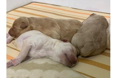 成約済の埼玉県のミックス犬の7枚目