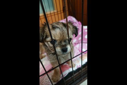 販売中の兵庫県のミックス犬の5枚目