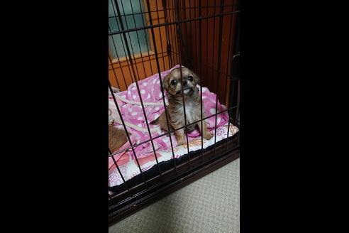 販売中の兵庫県のミックス犬の4枚目