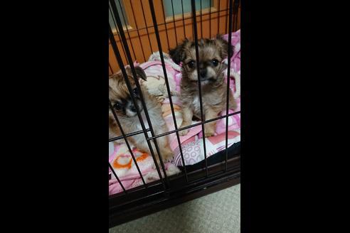 販売中の兵庫県のミックス犬の3枚目