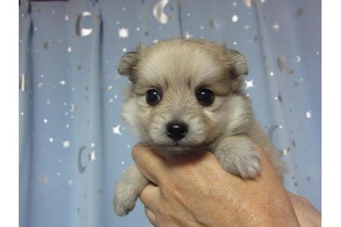 成約済の福岡県のミックス犬の35枚目