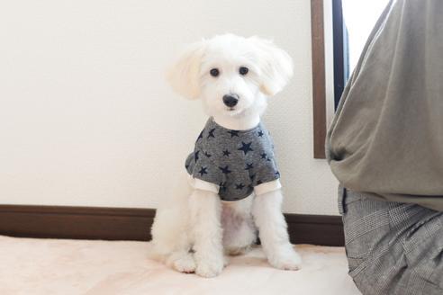 販売中の福岡県のミックス犬の5枚目