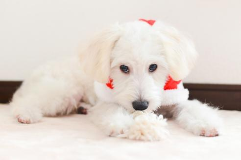 販売中の福岡県のミックス犬の4枚目