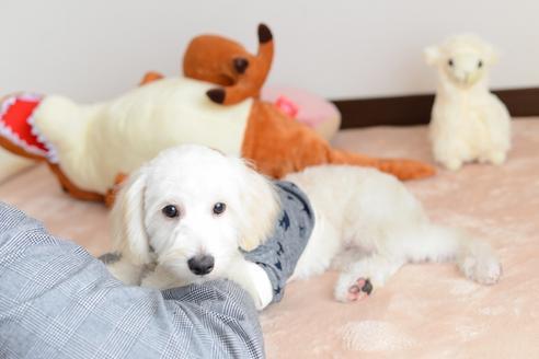 販売中の福岡県のミックス犬の3枚目