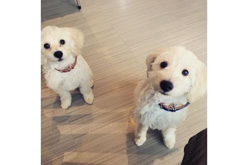 販売中の福岡県のミックス犬の2枚目