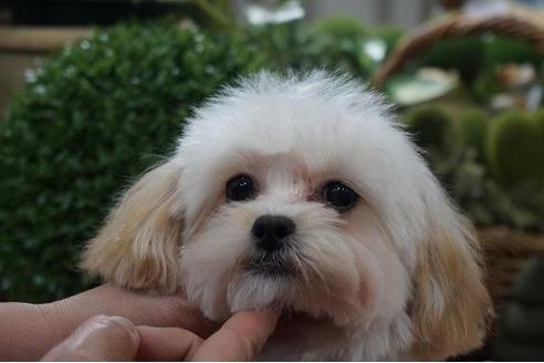 成約済の京都府のミックス犬の1枚目