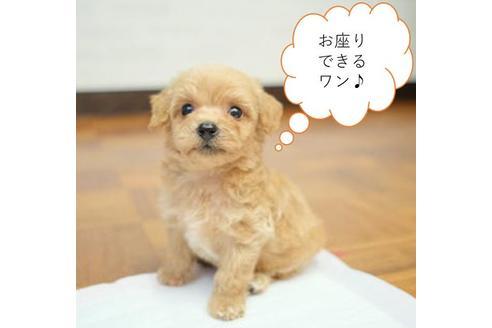 販売中の愛媛県のミックス犬の1枚目