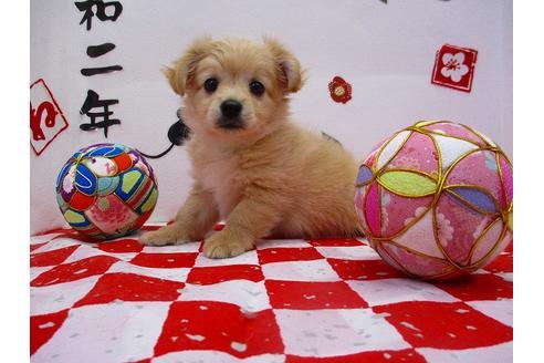 成約済の鳥取県のミックス犬の5枚目