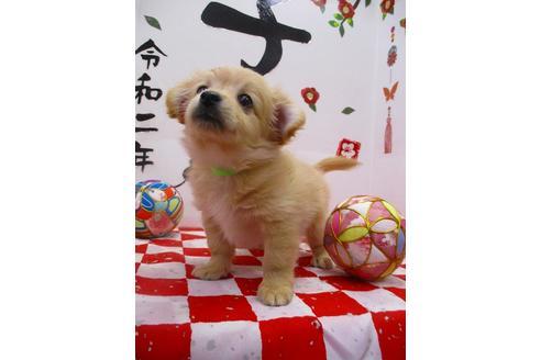 成約済の鳥取県のミックス犬の1枚目