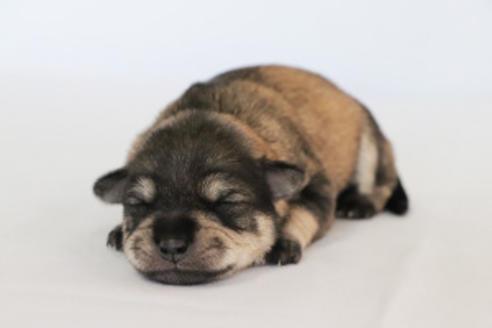 販売中の神奈川県のミックス犬の5枚目