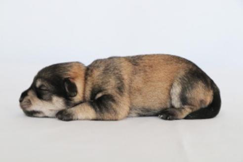 販売中の神奈川県のミックス犬の4枚目