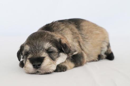 販売中の神奈川県のミックス犬の3枚目