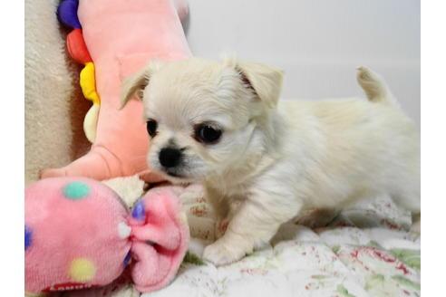 販売中の栃木県のミックス犬の5枚目