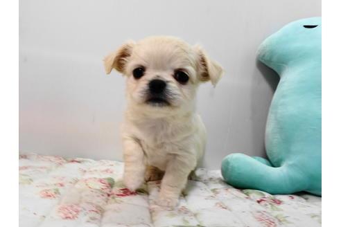 販売中の栃木県のミックス犬の4枚目