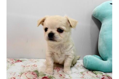 販売中の栃木県のミックス犬の3枚目