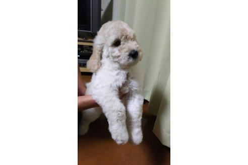 成約済の埼玉県のミックス犬の1枚目
