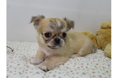 成約済の栃木県のミックス犬の10枚目