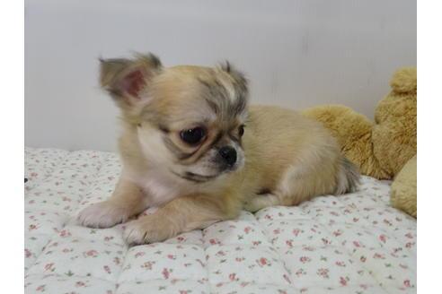 成約済の栃木県のミックス犬の9枚目