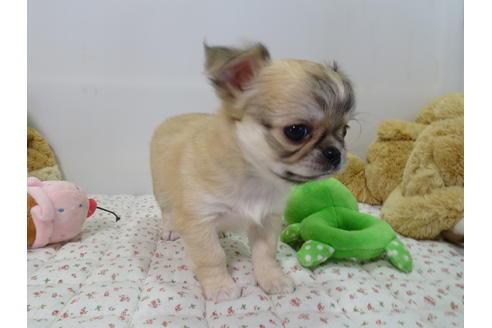 成約済の栃木県のミックス犬の8枚目