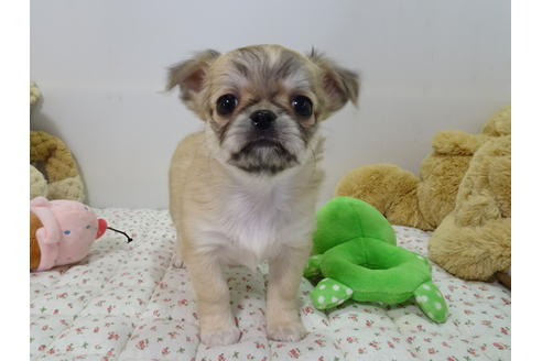 成約済の栃木県のミックス犬の7枚目