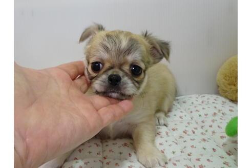 成約済の栃木県のミックス犬の6枚目
