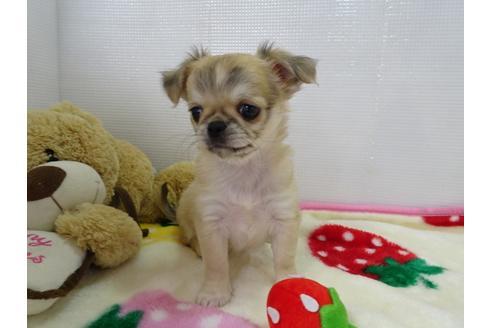 成約済の栃木県のミックス犬の5枚目