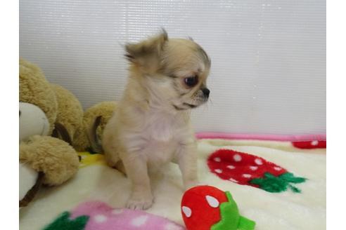 成約済の栃木県のミックス犬の4枚目