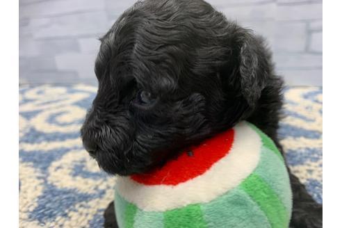 販売中の東京都のミックス犬の14枚目