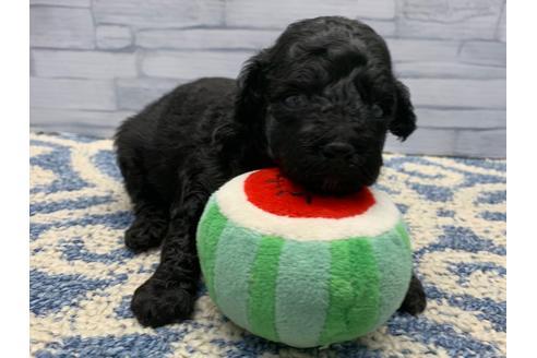 販売中の東京都のミックス犬の15枚目