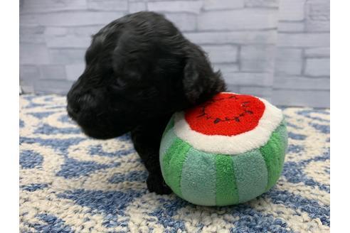 販売中の東京都のミックス犬の12枚目