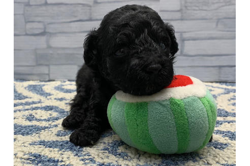 販売中の東京都のミックス犬の11枚目