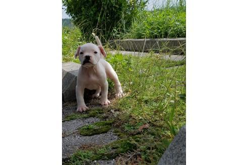 商談中の沖縄県のミックス犬の31枚目
