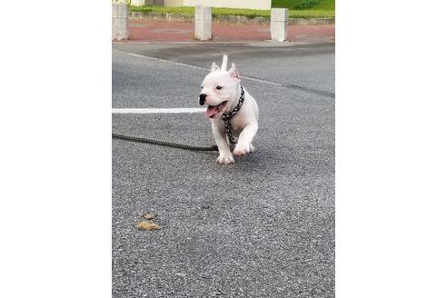 商談中の沖縄県のミックス犬の18枚目