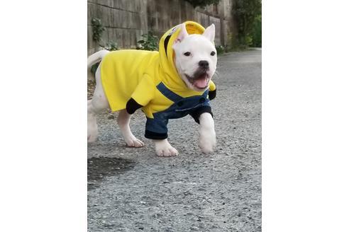 商談中の沖縄県のミックス犬の11枚目