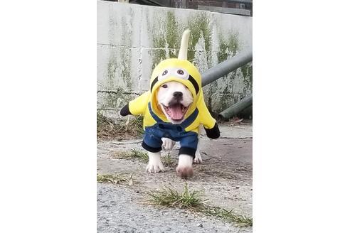 商談中の沖縄県のミックス犬の12枚目