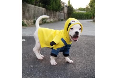 商談中の沖縄県のミックス犬の10枚目