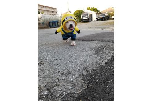 商談中の沖縄県のミックス犬の8枚目